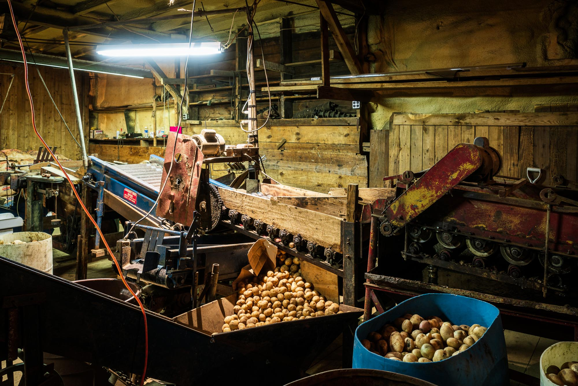Vermont_Potatoes_001-2