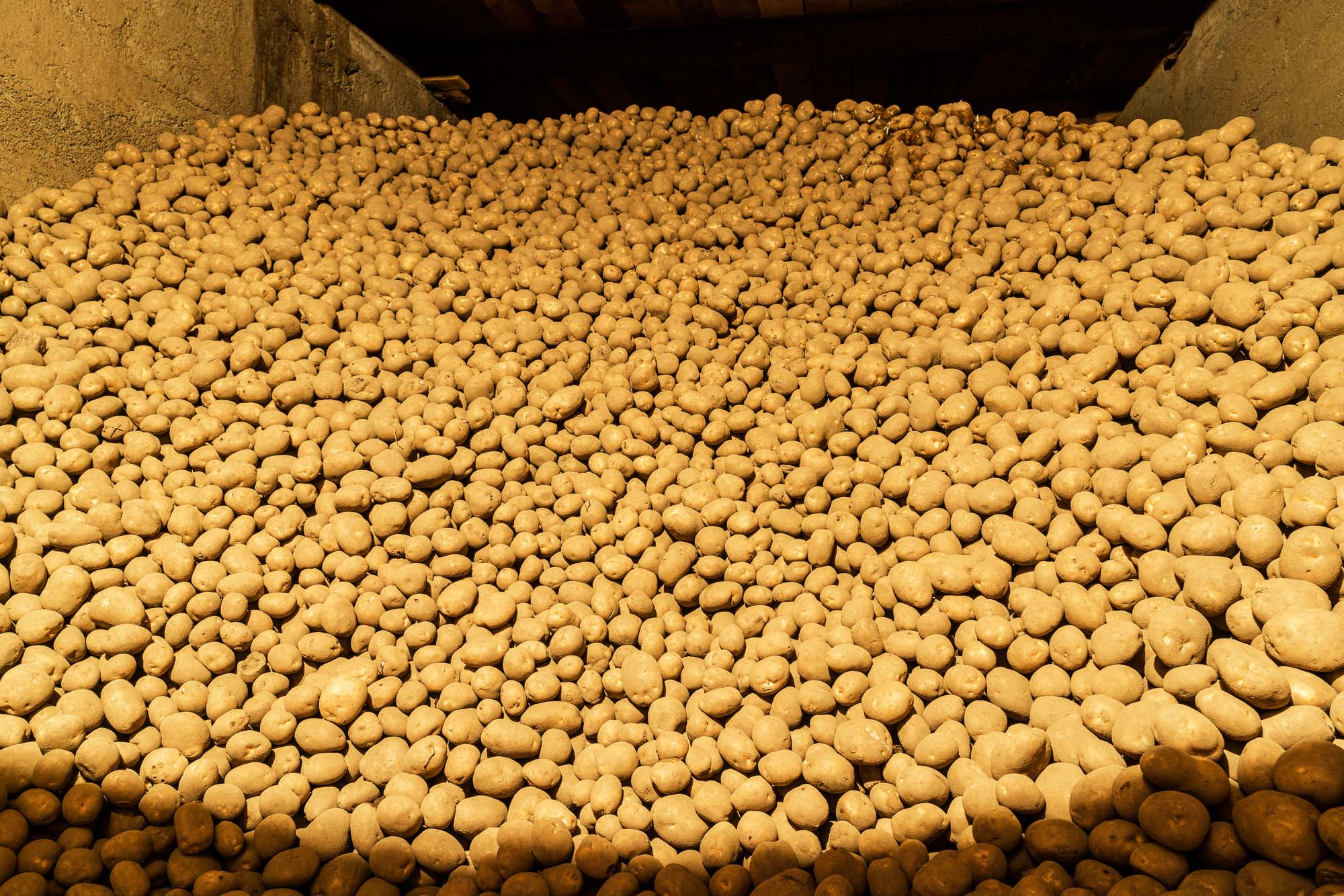 Vermont_Potatoes_001